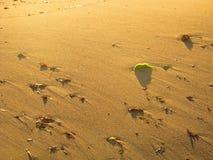 Par la plage Images libres de droits