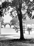 Par la pluie Photographie stock libre de droits