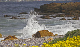 Par le bord de la mer Photo libre de droits