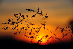 Par le coucher du soleil Images stock