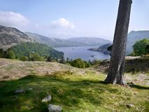 Par le tronc d'arbre regardant à Ullswater, secteur de lac Photo libre de droits