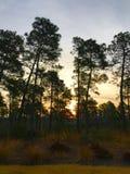 Par les arbres Photographie stock