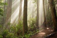Par les arbres Images libres de droits
