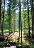 Par les arbres Photo stock
