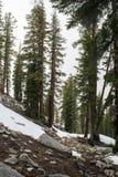 Par les bois Photographie stock libre de droits