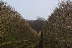 Par les buissons Photos libres de droits