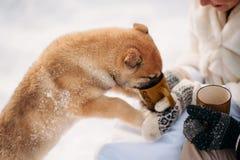 Par med en hund i vinterskog royaltyfri foto