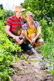 Par med slangen som bevattnar trädgården Royaltyfri Foto