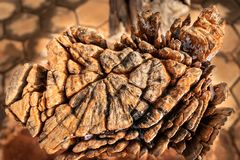 Par nature en raison fait par art en bois de la longue exposition par temps diff?rent photos libres de droits