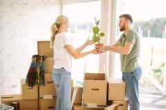 Par packar upp askar i nytt hem Kvinna som ger blomman till hennes make royaltyfria bilder