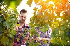 Par som arbetar in i vingård arkivbild
