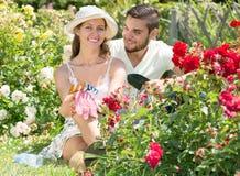 Par som att bry sig deras trädgård Fotografering för Bildbyråer