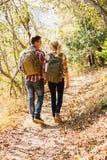 Par som går höstskogen Arkivfoto