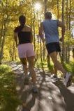 Par som joggar till och med skogsmark Royaltyfria Foton
