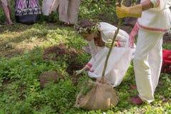 par som planterar treen Arkivfoton