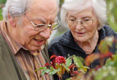 par som ser den rose pensionären till Fotografering för Bildbyråer