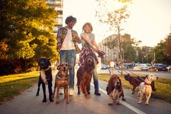 Par som in tycker om, går med hundkapplöpning arkivbild