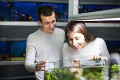 Par som väljer akvariefisken Fotografering för Bildbyråer
