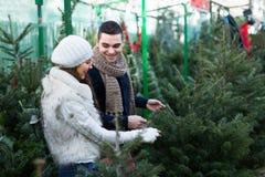 Par som väljer julgranen royaltyfri bild