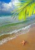 Paraíso com palmeira Imagem de Stock