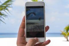 Paraíso con Smartphone Imagenes de archivo