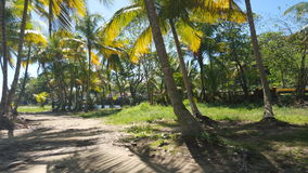Paraíso da palmeira Fotografia de Stock