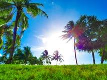 Paraíso da praia, céu azul, palmas verdes & vivas e grama imagem de stock royalty free