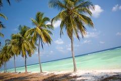Paraíso de la isla - palmeras Fotos de archivo