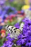 Paraíso de la mariposa fotos de archivo libres de regalías