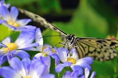 Paraíso de la mariposa Imágenes de archivo libres de regalías