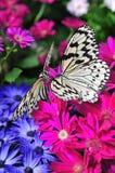 Paraíso de la mariposa Imagenes de archivo