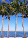 Paraíso de la palma Imagen de archivo libre de regalías