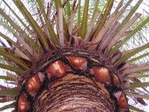 Paraíso de la palma Foto de archivo libre de regalías