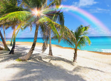 Paraíso de la palmera en el Caribe Fotografía de archivo