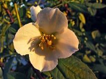 Paraíso del campo de flor pequeño de Ucrania Foto de archivo libre de regalías