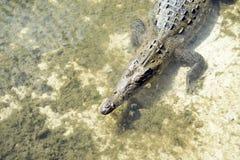 Paraíso del cocodrilo fotografía de archivo libre de regalías