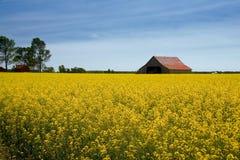 Paraíso del granjero Imágenes de archivo libres de regalías