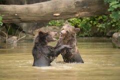 Paraíso del juego para los osos jovenes Fotos de archivo