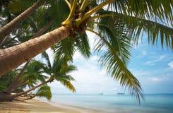 Paraíso do coco Imagens de Stock