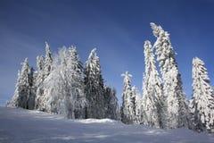 Paraíso do inverno Imagem de Stock Royalty Free