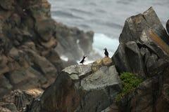 Paraíso do papagaio-do-mar imagem de stock royalty free