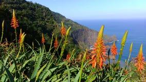 Paraíso Madeira Fotos de archivo libres de regalías