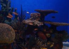 Paraíso subacuático Fotos de archivo