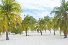 Paraíso terrestre, palmeras sol y arena cerca del mar Fotografía de archivo