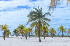 Paraíso terrestre, palmeras sol y arena cerca del mar Imágenes de archivo libres de regalías