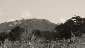 Paraíso tropical de la montaña del lado jamaicano del país almacen de metraje de vídeo