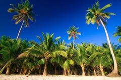 Paraíso tropical de la palmera Fotos de archivo libres de regalías