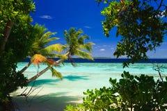 Paraíso tropical em Maldives fotos de stock