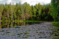 Paraíso verde Fotografia de Stock