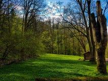 Paraíso verde Imagens de Stock Royalty Free